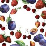 Aquarellfrucht- und -beerenrahmen der Kirsche, der Erdbeere und der Pflaumen Stockbilder