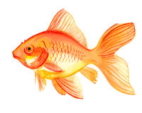 Aquarellgoldfische Lizenzfreie Stockbilder