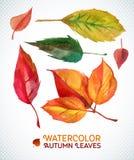 Aquarellherbst-Blattsatz Illustration Sammlung gezeichnete Blätter des Aquarells Hand Lizenzfreie Stockfotografie
