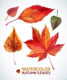 Aquarellherbst-Blattsatz Vektorillustration Sammlung der Aquarellhand gezeichnet verlässt Stockfoto