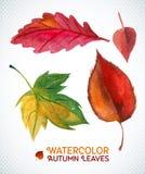 Aquarellherbst-Blattsatz Vektorillustration Sammlung der Aquarellhand gezeichnet verlässt Stockfotografie
