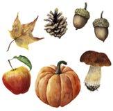 Aquarellherbst-Erntesatz Handgemalter Kiefernkegel, Eichel, Kürbis, Apfel, Pilz und gelbes Blatt lokalisiert auf Weiß Lizenzfreies Stockfoto