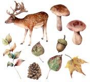 Aquarellherbstwald mit Rotwildsatz Handgemalter Kiefernkegel, Eichel, Hasen, Pilz, Gelbblätter und Niederlassung lokalisiert lizenzfreie abbildung