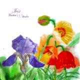 Aquarellhintergrund mit Mohnblume und Blumen Lizenzfreie Stockbilder