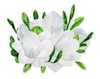 Aquarellhochzeitsfreesie-Blumenstraußvektor Lizenzfreies Stockbild