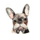 Aquarellillustration der französischen Bulldogge Lizenzfreie Stockfotos