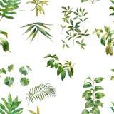 Aquarellillustration des Blattes, nahtloses Muster Stock Abbildung