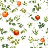 Aquarellillustration des Blattes und des Apfels, nahtloses Muster Lizenzfreie Stockbilder