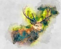Aquarellillustration eines Rotwilds Stockfoto