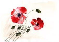 Aquarellillustration mit zwei Farbmohnblumen Stockbilder