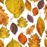 Aquarellillustration, Muster Herbstblätter auf einem weißen Hintergrund stockfotografie