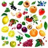 Aquarellillustration, Satz Aquarellfrucht und Beeren, Teile und Blätter, Pfirsich, Pflaume, Zitrone, Orange, Apfel, Trauben, stra lizenzfreie abbildung