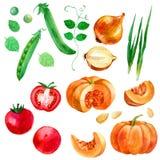 Aquarellillustration, -satz, -bild des Gemüses, -tomaten, -erbsen, -kürbis und -zwiebeln Lizenzfreie Stockfotos