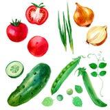 Aquarellillustration, -satz, -bild des Gemüses, -zwiebeln, -erbsen, -gurken und -tomaten Stockbild