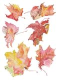 Aquarellillustration von Ahornblättern in den roten und gelben Farben stock abbildung