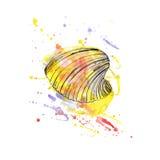 Aquarellillustration von Muscheln lizenzfreie abbildung