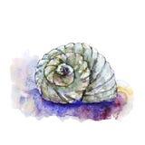 Aquarellillustration von Seeoberteilen Stockfotografie