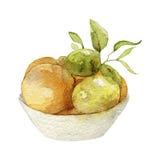 Aquarellillustration von Zitrusfrüchten Stockfotos