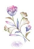 Aquarellillustrationsblume im einfachen Hintergrund Stockbild