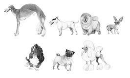 Aquarellillustrationssatz Hunde Stockfotos