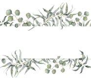 Aquarellkarte mit Eukalyptusniederlassung Handgemalter Blumenrahmen mit runden Blättern des Eukalyptus des silbernen Dollars loka Lizenzfreie Stockbilder