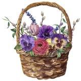 Aquarellkorb mit Blumen Handgemalte Tulpe, Pansies, Anemone, Ranunculus, Weide, Lavendel und Baumast mit lizenzfreie abbildung