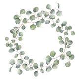 Aquarellkranz mit Eukalyptusniederlassung des silbernen Dollars Handgemalte Blumenillustration mit den runden Blättern an lokalis stock abbildung