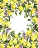 Aquarellkranz mit Niederlassung der frischen Zitrusfruchtzitrone, der grünen Blätter und der Blumen vektor abbildung