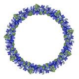 Aquarellkreisblumenrahmen Heftige Blumen und Blätter auf weißem Hintergrund Stockbild