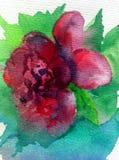 Aquarellkunsthintergrundzusammenfassungsfrühling rote rosa grüne dalicate Licht-Blumenrose einzeln Lizenzfreie Stockbilder
