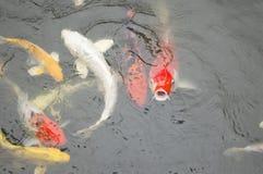 Aquarellmalerei auf weißem Hintergrund Stockbilder