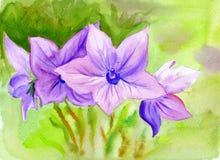 Aquarellmalerei Glockenblume, Blumen Stockbild