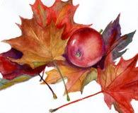 Aquarellmalerei - roter Apfel und Herbstlaub Stockbild