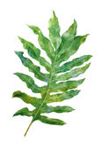 Aquarellmalerei von Blättern auf weißer Hintergrundillustration Vektor Abbildung