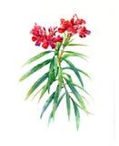 Aquarellmalerei von Blättern und von Blume Vektor Abbildung