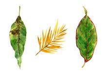 Aquarellmalerei von Blättern und von Blume Lizenzfreie Abbildung