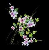 Aquarellmalerei von Blättern und von Blume Lizenzfreies Stockbild