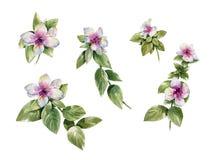 Aquarellmalerei von Blättern und von Blume, auf weißem Hintergrund Lizenzfreie Abbildung