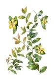 Aquarellmalerei von Blättern und von Blume, auf weißem Hintergrund Vektor Abbildung