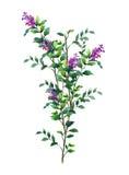Aquarellmalerei von Blättern und von Blume, auf weißem Hintergrund Stockbild