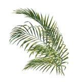 Aquarellmalerei von Kokosnusspalmblättern Lizenzfreies Stockbild