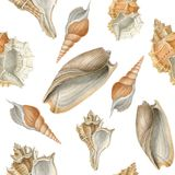 Aquarellmeer schält nahtloses Muster Stockbild