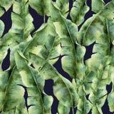 Aquarellmuster mit Bananenpalmblättern Handgemaltes exotisches Grün verzweigen sich Tropische Anlage lokalisiert auf dunkelblauem Lizenzfreie Stockfotos