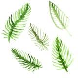 AquarellPalmeblätter eingestellt Grüne Wedelsammlung Abbildung getrennt auf weißem Hintergrund Lizenzfreies Stockbild