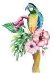 Aquarellpapagei mit exotischen Blumen und Blättern stock abbildung
