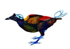 Aquarellparadiesvogel Stockbild