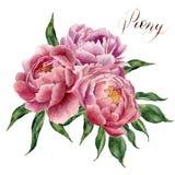 Aquarellpfingstrosenblumenstrauß lokalisiert auf weißem Hintergrund Handgemalte rosa Pfingstrosenblumen und Grünblätter Blumenill Stockbild