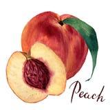 Aquarellpfirsich mit Blatt und halber Schnittpfirsich, Pfirsich beschriftend Hand gezeichnete Lebensmittelillustration auf weißem Stockfotografie