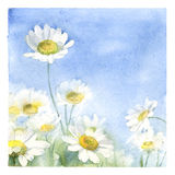 Aquarellplakat mit Kamillenwiese Handgemalte Grußmit blumenkarte Stockfotos