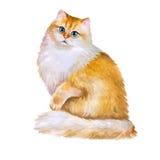 Aquarellporträt der langen Haarkatze der britischen goldenen Chinchilla auf weißem Hintergrund Hand gezeichnetes süßes Haupthaust Stockfoto